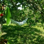 Sieste sur le hamac à l'ombre des cerisiers du jardin