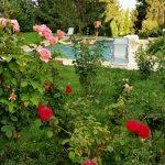 Piscine et rosiers de La Cadole de Chardonnay
